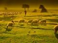 Dobry pastyr.jpg